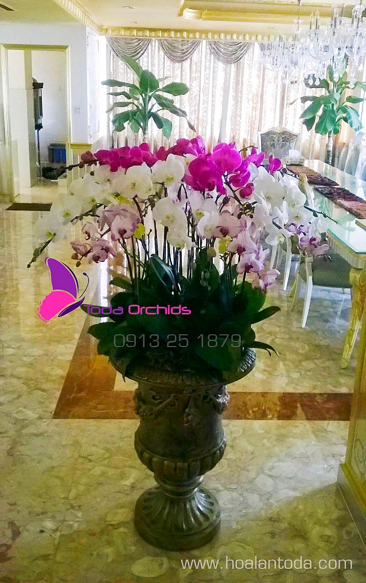 hoa phong khach hop phong thuy