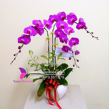 hoa tang sinh nhat em gai