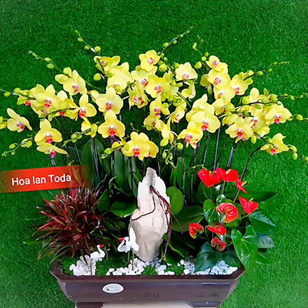 hoa lan cay canh mini de ban lam viec van phong